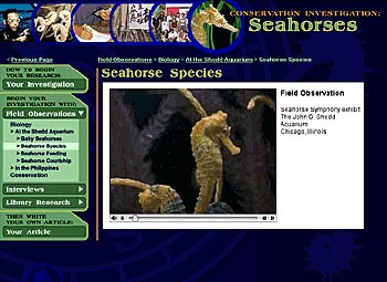 Figure 9. Seahorse video clip from Conservation Investigation: Seahorses